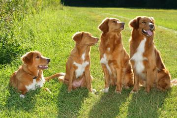 Gruppe von Hunden in der Wiese
