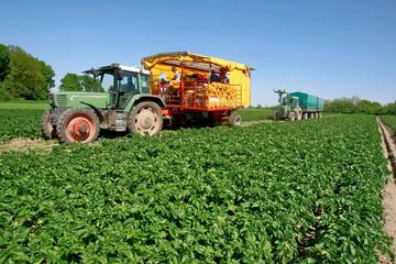 LandwirtschaftFruehkartoffelrodung