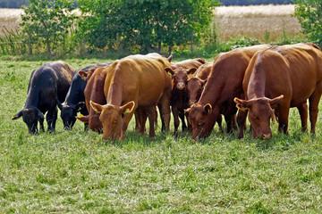 LandwirtschaftKueheRinderMilch