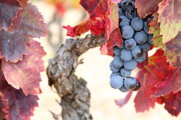 Priorat, vines, landscape,Montsant mountains,Tarragona, Spain