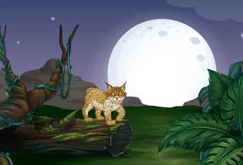 Lynx and forest