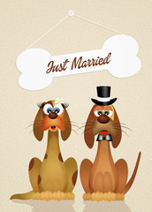 Marriage of dogs