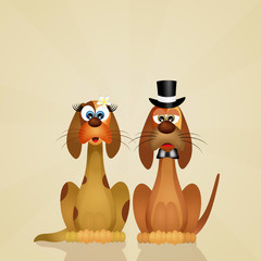 dogs couple