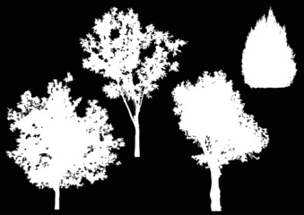 four isolated white trees silhouettes