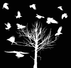 white dry large tree and crows silhouettes isolated on black