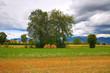Hay bale field. Umbria. Italy.