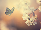 Pastel colored photo of butterfly and spring flowers