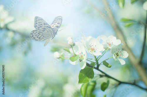 Fototapety, obrazy : Pastel colored photo of butterfly and spring flowers