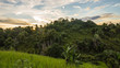 Ikalalao Jungle