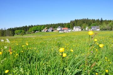 Bergwiese bei Altenfeld / Thüringer Wald