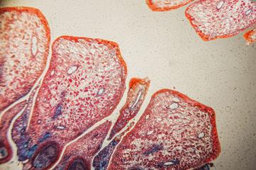 plant tissue