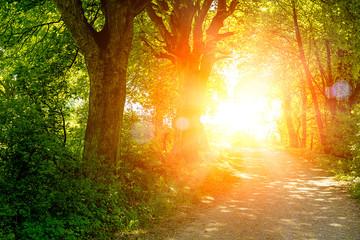 Sonne strahlt durch den waldweg