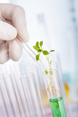 Plant chemical research