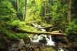 Leinwanddruck Bild - Bachlauf im Wald - Ilsetal - Harz