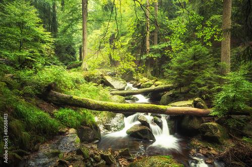 Aluminium Bossen Bachlauf im Wald - Ilsetal - Harz