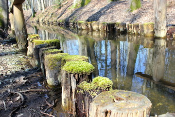 Naturjuwel: Bach fließt durch einen Wald unter Brücke hindurch
