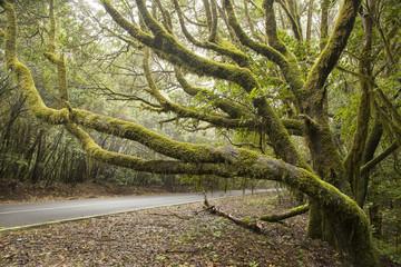 bosco subtropicale di laura-silva