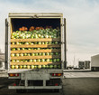 trailer laden with cabbage - 80593094