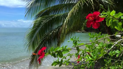 Red Hibiscus Flowers with Palm Trees Brazilian Beach