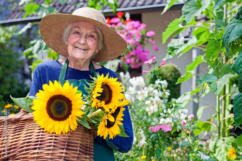 Leinwanddruck Bild Happy Old Woman with Baskets of Fresh Sunflowers.