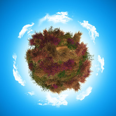 3D globe with heather and fern