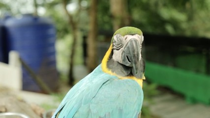 Macaw in zoo