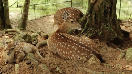 Young deer in the park