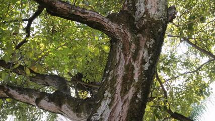 Tree Tilt Up Time Lapse