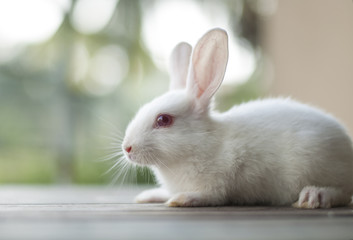 Cute little white baby bunny rabbit 02
