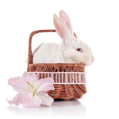 White rabbit in a basket with a lily flower.
