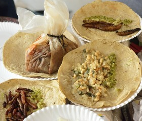 Fried insects and worms tacos from Mexican traditional cuisine