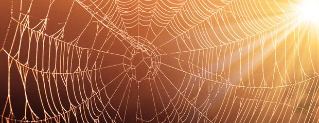 Das Netz einer Spinne