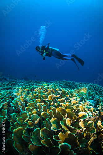 diver above coral bunaken sulawesi indonesia underwater photo