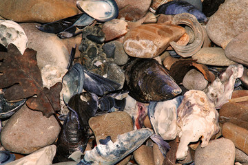 stones and mussels