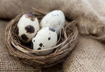 oeufs de cailles dans un nid