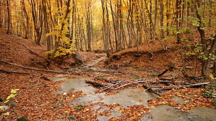 Autumn rill flow into canyon. Yellow forest and river.