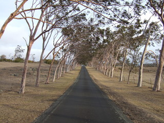 風の並木道