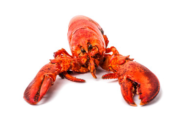 red lobster isolated on a white background