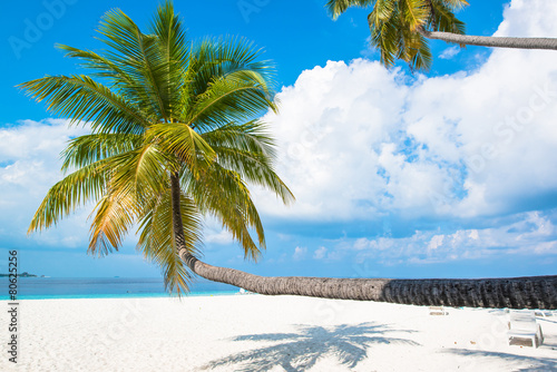 Poster Tropical white sand beach with palm trees