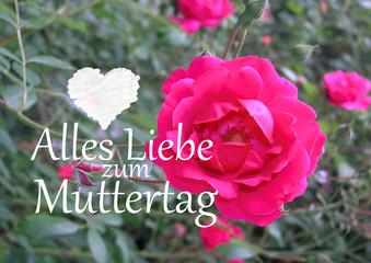 Muttertagsgrüße mit roter Rose und Herz