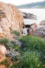 Beautiful violet flowers on beach of Mykonos.