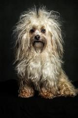 hund mit einsteinfrisur