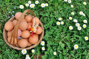 Cesto di uova nell'erba