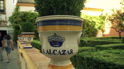 Flowerpot in garden in Seville, Spain