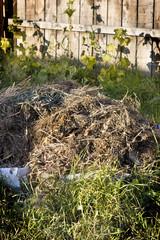 compost heap in a kitchen garden