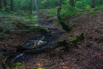 Laubwaldlandschaft