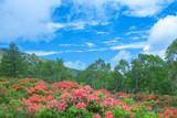 ツツジ咲く高原
