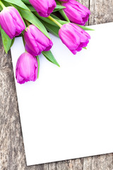 violet tulips on the oak brown table with white sheet of paper 3