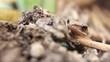 Lone Indonesian Tree Frog