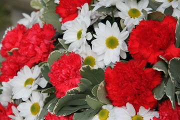 Rote Nelken mit Margeriten